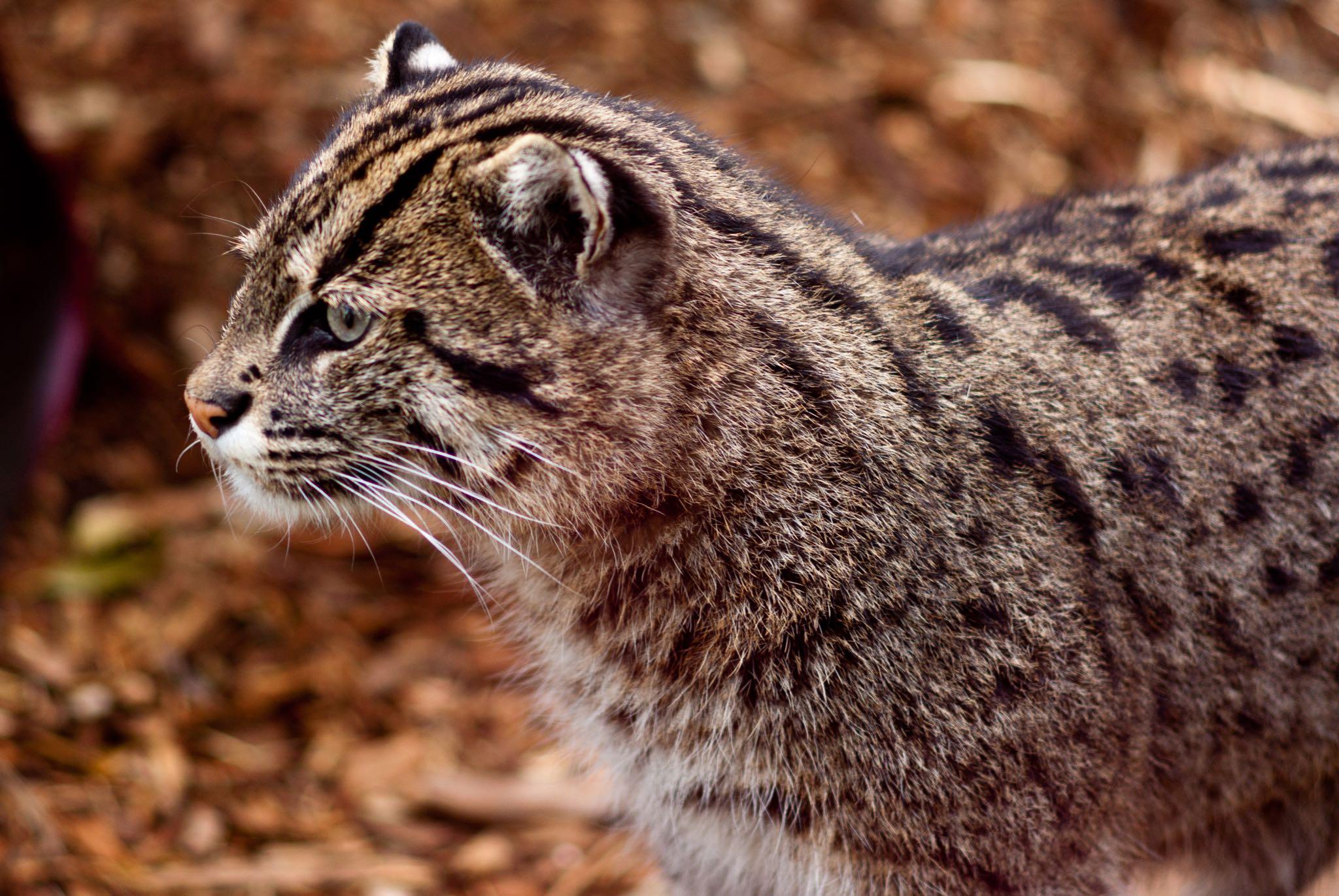 Taronga Zoo 2010